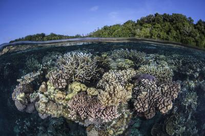 A Colorful Coral Reef Grows in the Solomon Islands