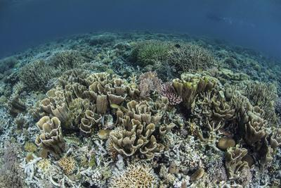Delicate Corals Grow Near the Island of Flores in Indonesia
