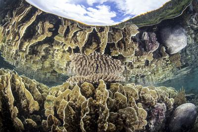 Reef-Building Corals in Raja Ampat, Indonesia