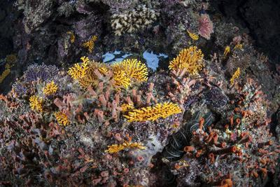 A Colorful Coral Reef Grows Along a Deep Dropoff in the Solomon Islands