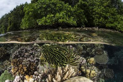 A Colorful Crinoid Clings to a Shallow Reef in the Solomon Islands