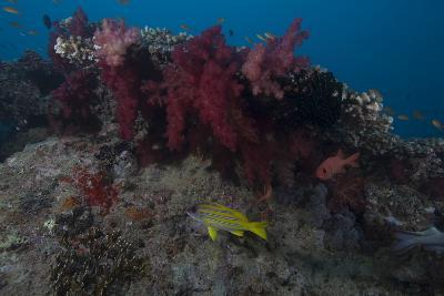 Soft Coral on a Fijian Reef