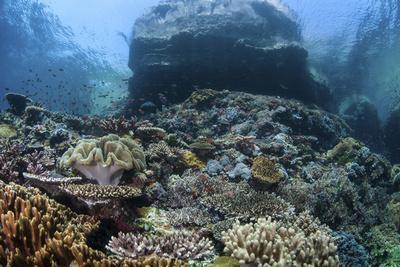 A Beautiful Coral Reef Thrives on an Underwater Slope in Indonesia