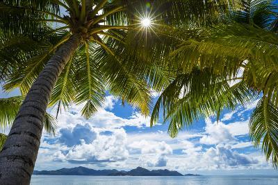 Palm Trees and Tropical Beach, La Digue, Seychelles