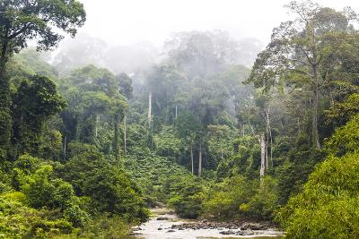 Mist and River Through Tropical Rainforest, Sabah, Borneo, Malaysia