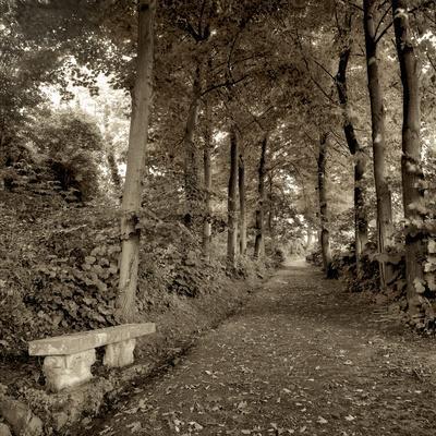 Fiesole Giardini II
