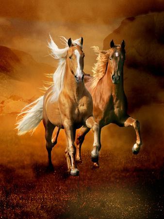 Dream Horses 075