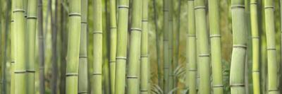 Bamboo Scape
