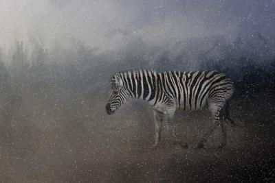 Zebra in a Snow Storm