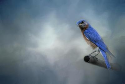 Bluebird on Patrol