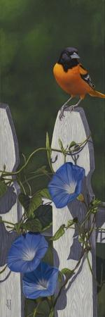 Oriole Morning Glories