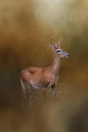 Buck in the Woods