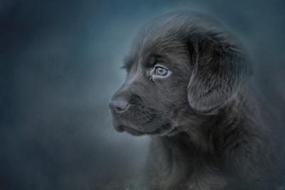 Blue Eyed Puppy