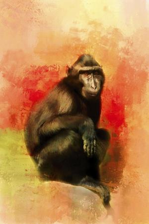 Colorful Expressions Black Monkey