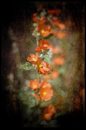 Desert Flower 5