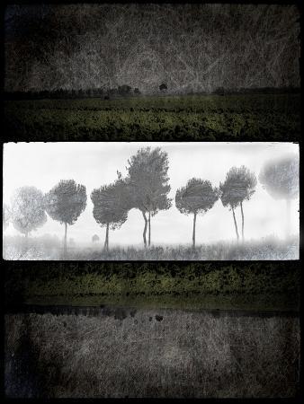 Black Tree 2