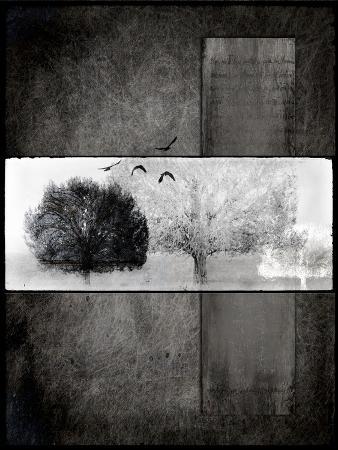 Black Tree 1