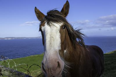 A Horse Standing Long the Antrim Coast in Northern Ireland