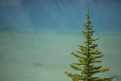 A Lone Pine Tree in Banff National Park