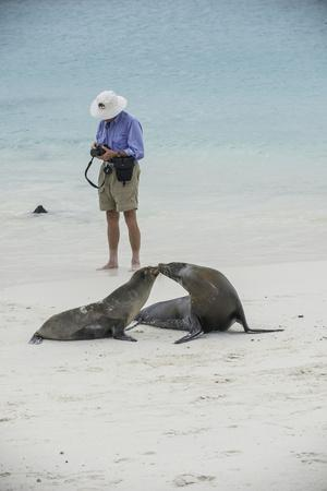 Tourists and Curious Galapagos Sea Lions Mingle on the Beach