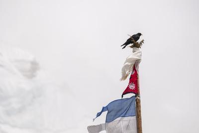 A Bird Perches Atop a Chorten Pole