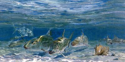 Bonefish Schooling with Permit Fish on the Flats