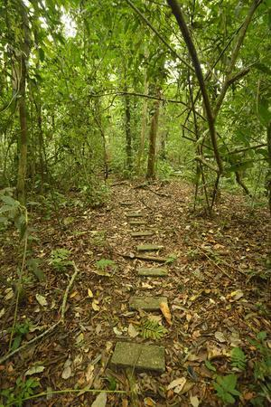Research Trail Through the Tropical Forest of Barro Colorado Island