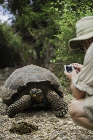 Tourist Photographing a Captive Galapagos Tortoise at the Charles Darwin Research Station