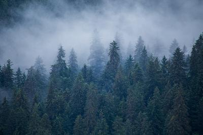Morning Fog Rises Off of a Spruce, Picea, Forest in Alaska's Inside Passage