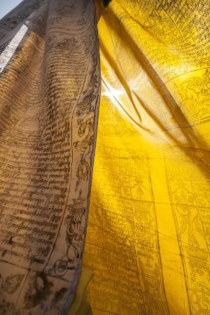 Sunlight Filters Through Prayer Flags