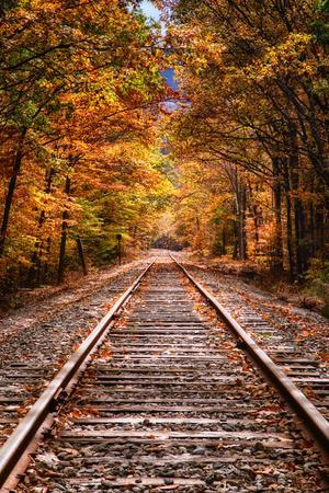 Tracks Into Fall, White Mountains New Hampshire, New England in Autumn