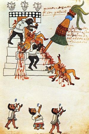 Codex Tudela: Aztec Human Sacrifice, 1553. Museo de América, Madrid, Spain