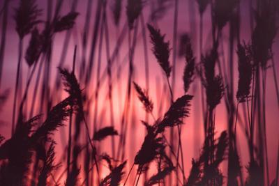 Reeds Close to Tormes River Salamanca Castile Leon Spain