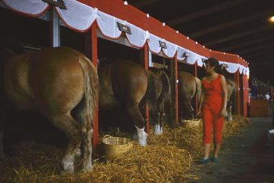 Woman Dressed in Red Walking Past Stalls of Clydesdale Horses at the Iowa State Fair, 1955