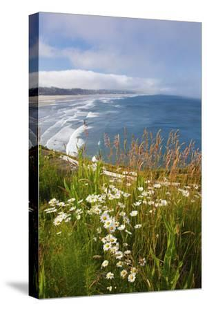 Wildflowers Along Yaquina Head; Newport Oregon United States of America