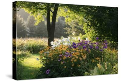 Summer Flower Adourn a Farm Garden