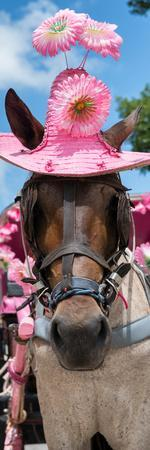 ¡Viva Mexico! Panoramic Collection - Horse with Pink Hat