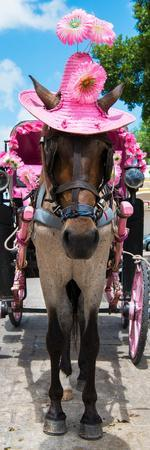 ¡Viva Mexico! Panoramic Collection - Horse with Pink Hat II