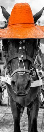 ¡Viva Mexico! Panoramic Collection - Horse with a Orange straw Hat