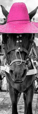¡Viva Mexico! Panoramic Collection - Horse with a Pink straw Hat
