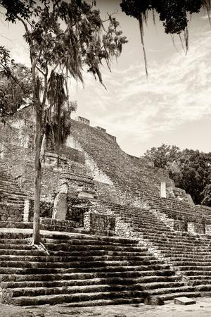 ¡Viva Mexico! B&W Collection - Pyramid of the ancient Mayan city of Calakmul V