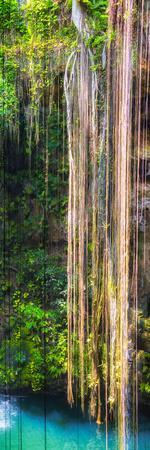 ¡Viva Mexico! Panoramic Collection - Hanging Roots of Ik-Kil Cenote III