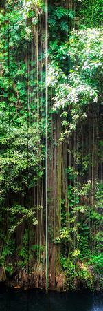 ¡Viva Mexico! Panoramic Collection - Hanging Roots of Ik-Kil Cenote VI
