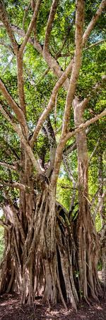 ¡Viva Mexico! Panoramic Collection - Jungle Trees