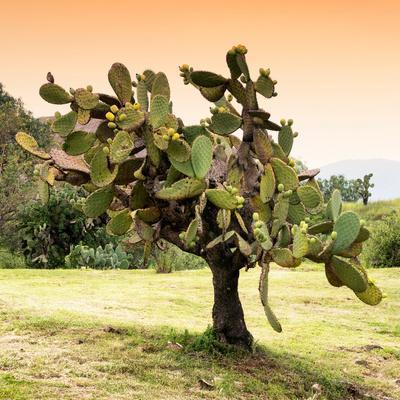 ¡Viva Mexico! Square Collection - Prickly Pear Cactus