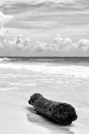 ?Viva Mexico! B&W Collection - Tree Trunk on a Caribbean Beach III