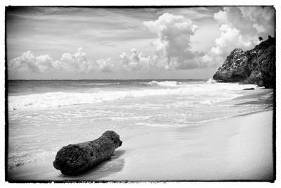 ¡Viva Mexico! B&W Collection - Tree Trunk on a Caribbean Beach