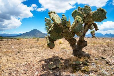 ¡Viva Mexico! Collection - Desert Landscape - Puebla