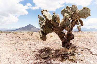 ¡Viva Mexico! Collection - Desert Landscape - Puebla II