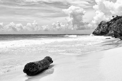 ?Viva Mexico! B&W Collection - Tree Trunk on a Caribbean Beach II